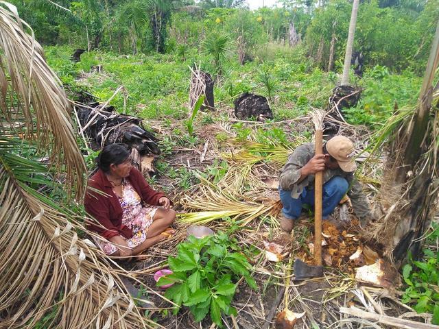 A couple collect ''aricuri'' from their field in Baía das Onças, Guaporé TI. Photo: Gabriel Sanchez, 2018.